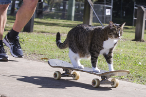 cat-owner-obligations