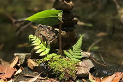 Eco photograhpy