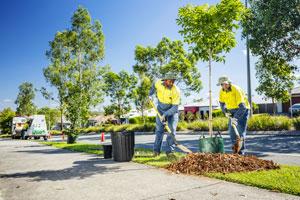 street-tree-planting