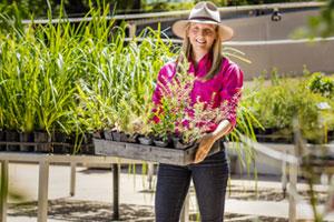 Free Plant Program