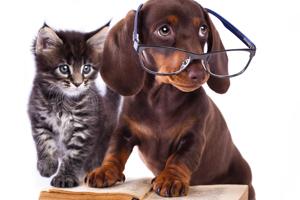 pet-education