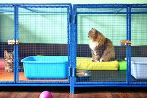 Kennels/Catteries/Pet Shops/Stables