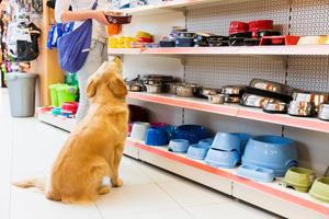Pet Shop Licenses